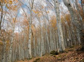 The best autumn photos in the Marche region