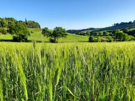 10 AGRITURISMI PER LA VACANZA PERFETTA NELL'ENTROTERRA DELLE MARCHE